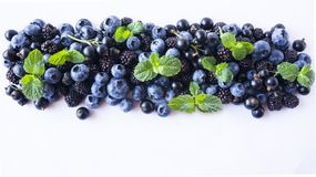 Czarne i Błękitne jagody odizolowywać na bielu Dojrzałe czarne jagody, czernicy z mennicą na białym tle Fotografia Stock