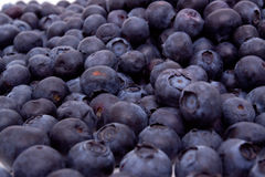 czarne jagody świeże Zdjęcia Stock