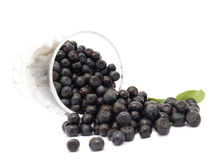 czarne jagody Fotografia Stock