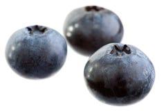 czarne jagody Obrazy Royalty Free