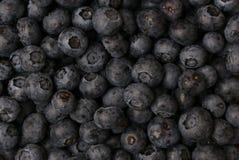 Czarne jagody Obraz Stock