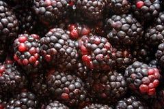 czarne jagody Zdjęcia Royalty Free
