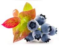 czarne jagody dojrzałe zdjęcia stock