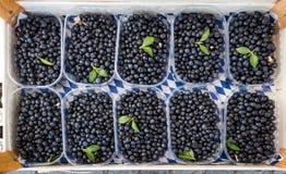 Czarne jagody i borówki dla sprzedaży na rynku, odgórny widok, Błękitna kolor tekstura zdjęcia royalty free