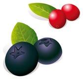Czarne jagody i cranberries kreskówka Obraz Royalty Free