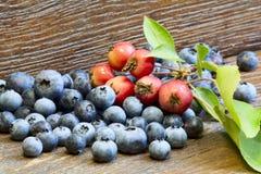 Czarne jagody i dzicy jabłka Obrazy Royalty Free