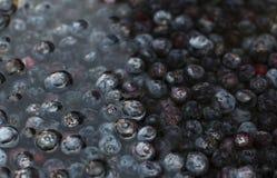 Czarne jagody Moczy w Szklanym pucharze woda Zdjęcia Royalty Free