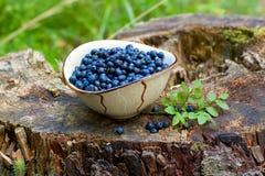 Czarne jagody na drzewnym fiszorku Zdjęcia Stock