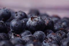 czarne jagody organicznie Zdjęcia Stock