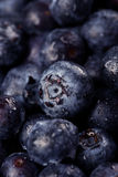 czarne jagody organicznie Obraz Stock