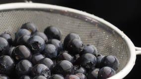 Czarne jagody rzucają upwards zbiory wideo