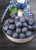 Czarne jagody w białym emaliowaniu rzucają kulą z błękitnymi faborkami i łękami Fotografia Stock