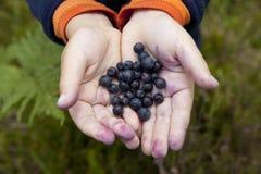 Czarne jagody w dziecko rękach Obrazy Royalty Free