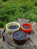 Czarne jagody w kubkach na drzewnym karczu Zdjęcie Royalty Free