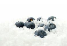Czarne jagody w lodzie Zdjęcia Royalty Free