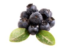 Czarne jagody z liść Obraz Stock