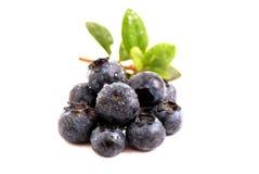 Czarne jagody z liść Zdjęcie Royalty Free