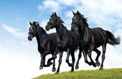 czarne konie Obraz Royalty Free