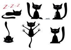 czarne koty Obraz Royalty Free