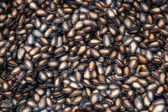 czarne nasiona melonów Zdjęcie Royalty Free