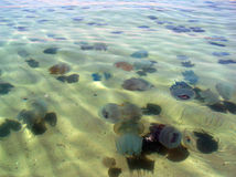czarne niebieskie jellyfishes morskie Obraz Royalty Free