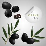 czarne oliwki Fotografia Stock