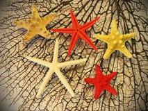 Czarne rozgwiazdy i koral Zdjęcie Stock