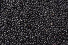 Czarne surowe fasole obraz stock