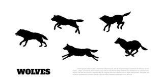 Czarne sylwetki kierdel wilki na białym tle royalty ilustracja