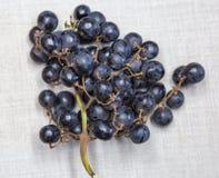 czarne wiązek winogron Fotografia Royalty Free