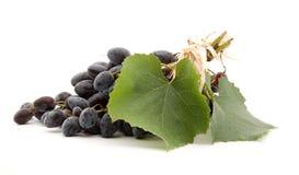 czarne winogron obrazy royalty free