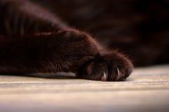 Czarnego kota łapy Zdjęcie Stock