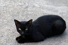 Czarnego kota charłaczy brzydki na podłoga obraz royalty free