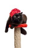 czarnego kota, czerwony odizolowana wpr Zdjęcie Royalty Free