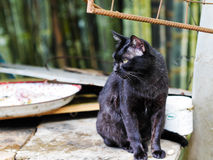 Czarnego kota dopatrywania jedzenie Obrazy Stock