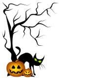 czarnego kota, dynie Halloween. Zdjęcie Royalty Free