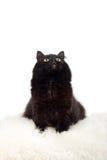 czarnego kota, futra white odosobnione zgrabny Zdjęcia Royalty Free