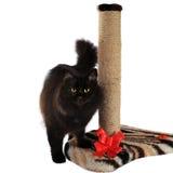 Czarnego kota i kota chrobota poczta odizolowywająca na białym tle Zdjęcie Royalty Free