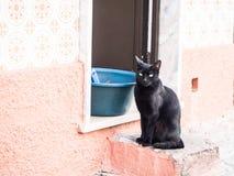 Czarnego kota inTavira, Algarve region, Portugalia Obrazy Royalty Free