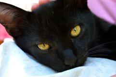 Czarnego kota kłamstwa fotografia royalty free