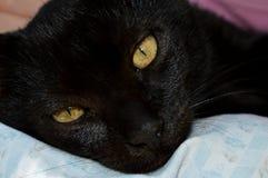 Czarnego kota kłamstwa zdjęcia stock