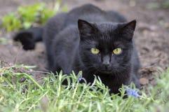 Czarnego kota k?amstwo w czekaniu w ogr?dzie, ciemna bestia z jasnozielonymi oczami, pi?kny zwierz?, kontakt wzrokowy obraz stock