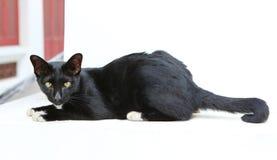 Czarnego kota lying on the beach i patrzeć kamerę obrazy stock