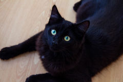 Czarnego kota lying on the beach na ziemi Fotografia Royalty Free