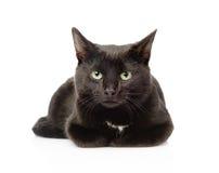 Czarnego kota lying on the beach w frontowej i patrzeje kamerze odosobniony Zdjęcie Royalty Free