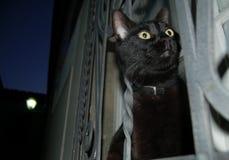 czarnego kota, noc Zdjęcia Royalty Free