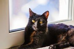 Czarnego kota obsiadanie na nadokiennym parapecie i czekanie dla wiosny Czarnego kota lying on the beach na windowsill Zdjęcia Royalty Free
