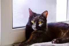 Czarnego kota obsiadanie na nadokiennym parapecie i czekanie dla wiosny Czarnego kota lying on the beach na windowsill Fotografia Royalty Free