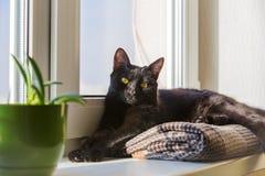 Czarnego kota obsiadanie na nadokiennym parapecie i czekanie dla wiosny Czarnego kota lying on the beach na windowsill Obrazy Royalty Free