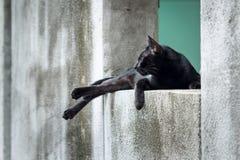 Czarnego kota odpoczywać Obraz Royalty Free